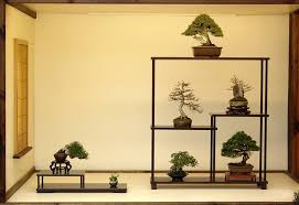 Shohin <b>bonsai</b> tree | Japanese <b>home decor</b>, <b>Bonsai</b>, <b>Bonsai</b> art