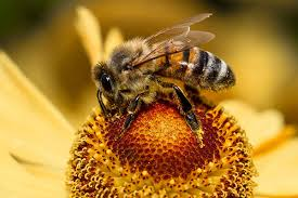 Why <b>Bee Traps</b> Aren't Your Best Option | Terminix