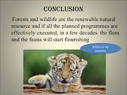 essay on conservation of wildlife wild life conservation essay   essay topics wildlife conservation essay topic image