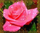 Гиф открытки цветы