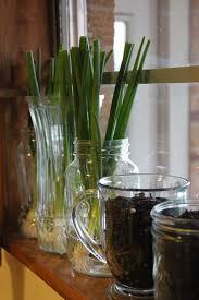 Kitchen Windowsill Herb Garden A Hint Of The Hess House My Little Herb Garden For The Kitchen Window