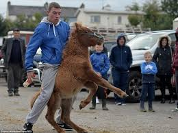My big fat gipsy horse fair  Up to        people descend on Irish town for one of Europe     s oldest and biggest annual horse meetings Barking Moonbat Early Warning System