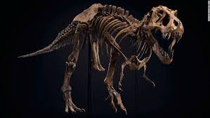 One of the world's biggest <b>Tyrannosaurus rex</b> skeletons is up for sale