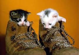 """Résultat de recherche d'images pour """"photo de chat"""""""