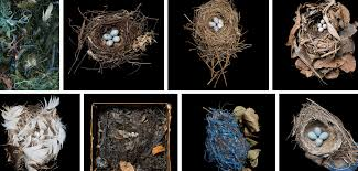 Image result for birds nests images