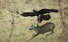 Resultado de imagem para caçando cervos