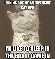 cat meme via Relatably.com
