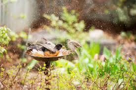 How to Position <b>Bird Baths</b>