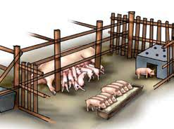 How to Farm Pigs   Housing   The Pig Site    Lactating sows Pigsty Building