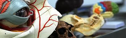 <b>Anatomy</b> | School of <b>Medical</b> Sciences