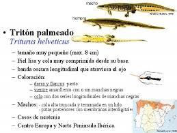 Resultado de imagen de ciencias marinas uvigo anfibios