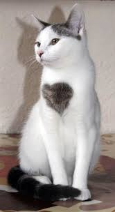 I Have a big heart fur love born special - Cat memes - kitty cat ... via Relatably.com