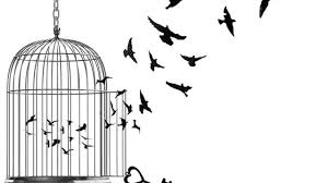 Image result for bird in cage