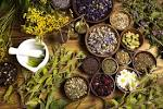 Images & Illustrations of herbalist