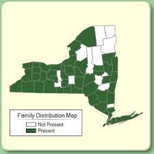 Phytolaccaceae - Family Page - NYFA: New York Flora Atlas - NYFA ...