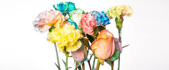 <b>Color</b> Changing Carnation <b>Flowers</b> | Experiments | Steve Spangler ...