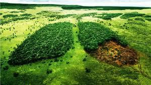 Resultado de imagen para el medio ambiente