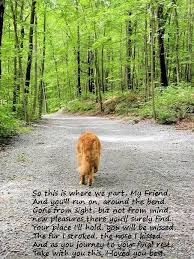 loss of pet | moi love!! | Pinterest | Loss Of Pet, Pets and So Sad via Relatably.com