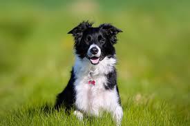<b>Pet</b> Friendly Holidays, <b>Dog</b> Friendly Breaks & More | VisitScotland