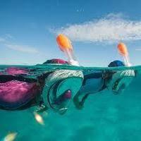 <b>Маски</b>, очки для плавания в Беларуси. Сравнить цены, купить ...