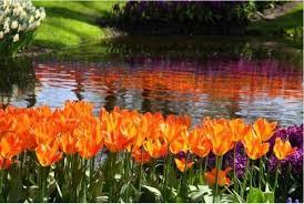 Imagini pentru cele mai frumoase flori