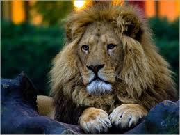 صور حيوانات متوحشة images?q=tbn:ANd9GcR