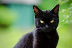 Image result for scary black cat