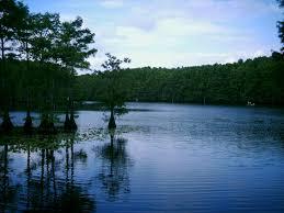 Caddo Lake State Park