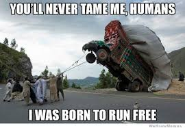 Youll Never Tame Me Humans Meme | WeKnowMemes via Relatably.com