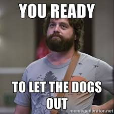 You rEady To let the Dogs out - Alan Hangover | Meme Generator via Relatably.com