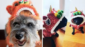 8 Dogs Dressed As Lion Dancers to Celebrate Year of the Dog   The ...