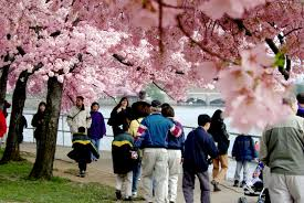 international tourism spending in 2011 supported 103 000 tourists enjoy the annual cherry blossoms along the tidal basin