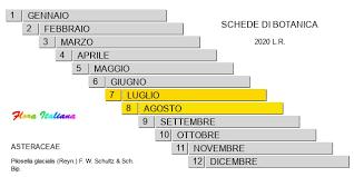 Pilosella glacialis [Sparviere glaciale] - Flora Italiana