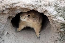 """Résultat de recherche d'images pour """"gif marmotte en sommeil"""""""