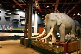 「台東史前文化博物館」的圖片搜尋結果