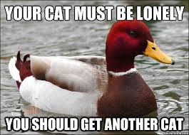 Your cat must be lonely you should get another cat - Malicious ... via Relatably.com
