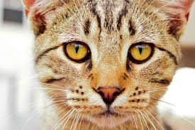 Cat Body Language: What Your <b>Cat's Eyes</b> Tell You About His ...