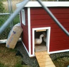 Dog House Plans  K  Law Enforcement Dog House PlansCustom Dog House Plans  Custom Dog House Plans