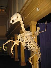 <b>Skeleton</b> - Wikipedia