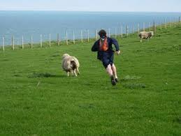 Image result for sheep shagger