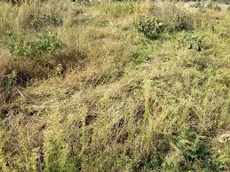 「自然農の畑の写真」の画像検索結果