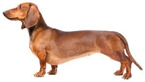 Ποιοι σκύλοι κάνουν ζημιές στο σπίτι;