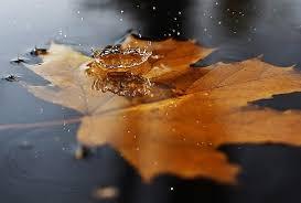 Risultati immagini per cadono le foglie