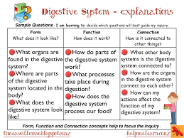digestive system conclusion essay about digestive system at digestive system conclusion one teacher39s journey body systems 5 asking 39strong39 questions digestive system conclusion essay