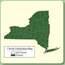 Cornaceae - Family Page - NYFA: New York Flora Atlas - NYFA ...