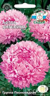 Купить <b>семена астры Ангелина</b> почтой по выгодной цене в ...