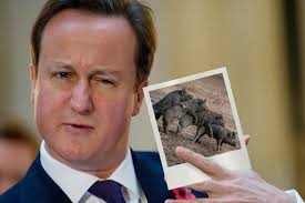 Image result for piggate