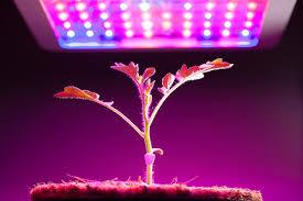 <b>Grow</b> Lights for Indoor Plants and Indoor Gardening: An Overview ...