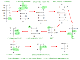glycolysis   biochem co   biochem  amp  science notesglycolysis diagram