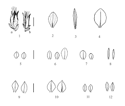 Molecular Aspects in Systematics of Gentiana Sect. Calathianae Froel.